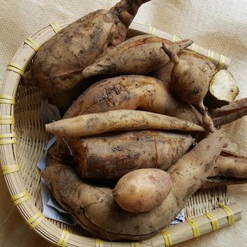 (인빌푸드)솔향기 야콘(쥬스용) [6kg]