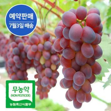 (인빌푸드)무농약_이슬머금은 홍포도[예약판매] [2kg(3송이)] 품질인증